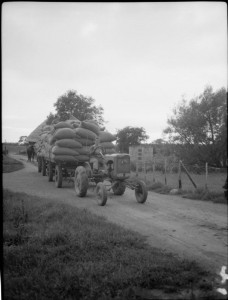 Hopping_in_Kent-_Hop-picking_in_Yalding,_Kent,_England,_UK,_1944_D22174
