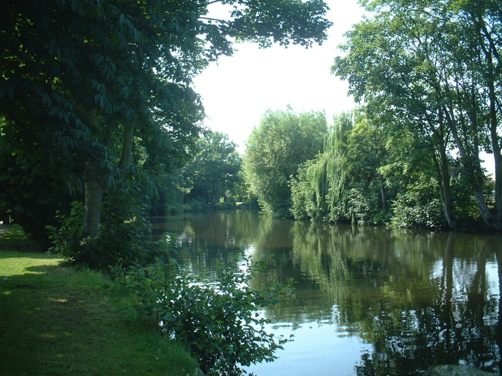 The_Wensum_under_trees