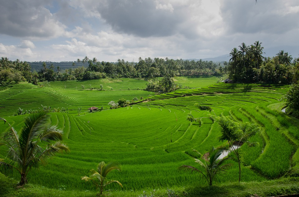 rice-terraces-384665_960_720